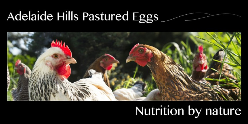 "Choice Australia updates the ""Good Egg"" list with Adelaide Hills Pastured Eggs"