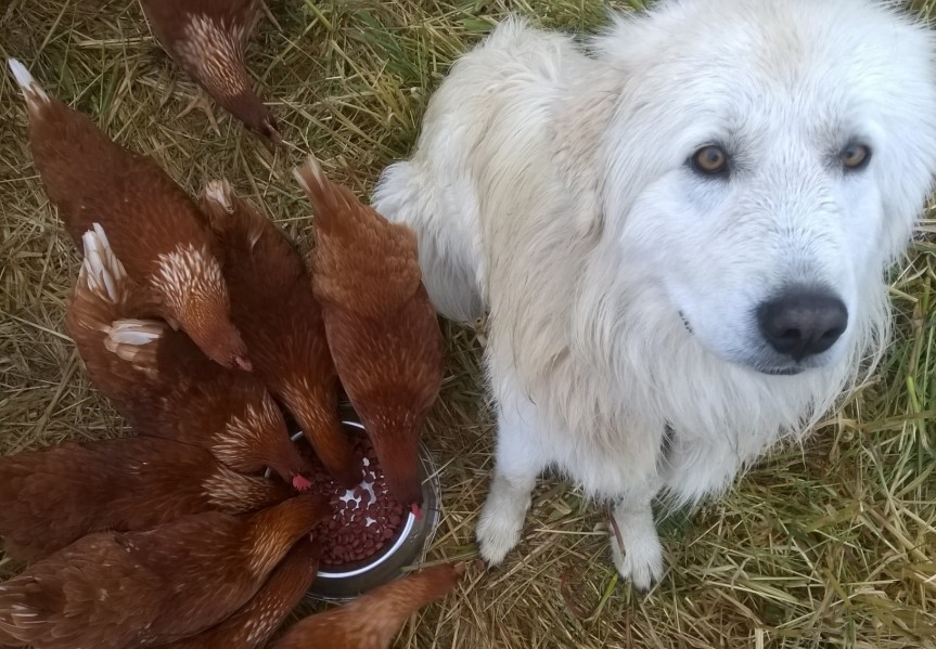 Its Official Adelaide Hills Pastured Eggs are on Sale thisSaturday
