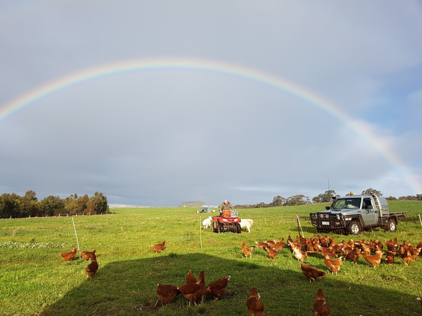 Rainbows and Pastured Eggs.